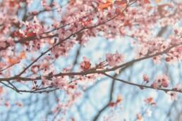 5 Sinne oder wie Wahrnehmung uns beeinflusst - Skills Teil 2 - Kirschblüten
